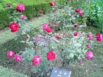 Furukawa_0710_07_melina