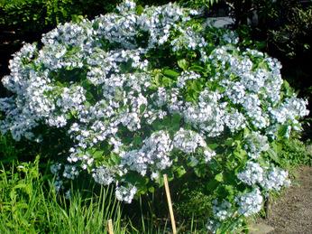Mukojima_100_flowers_0806_04